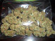 Quality 420 and 215 kush dank bud og kush to be delivered to your door